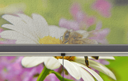 Bild - Insektenschutz auf Maß